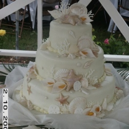 CAKE-OF-SHELL-DESIGN1